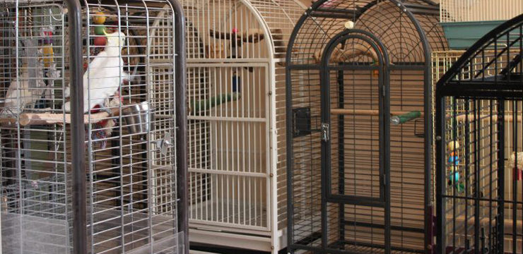 Some of the cages that are available for your bird